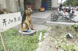 这大狗看着挺像真的