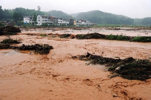 被洪水冲毁的朱口镇梅林村的农田(6月22日摄).图片