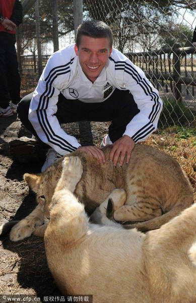 波多尔斯基与小狮子亲密接触