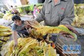 组图:江西峡江烟叶损失严重村民积极自救
