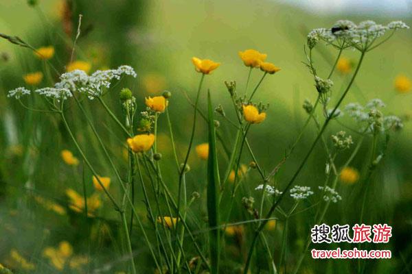 木兰围场-赛罕坝 被皇帝溺爱的草原