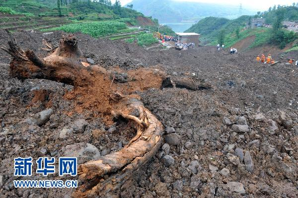 滑坡现场被连根拔起的树木(6月29日摄)。新华社记者欧东衢摄