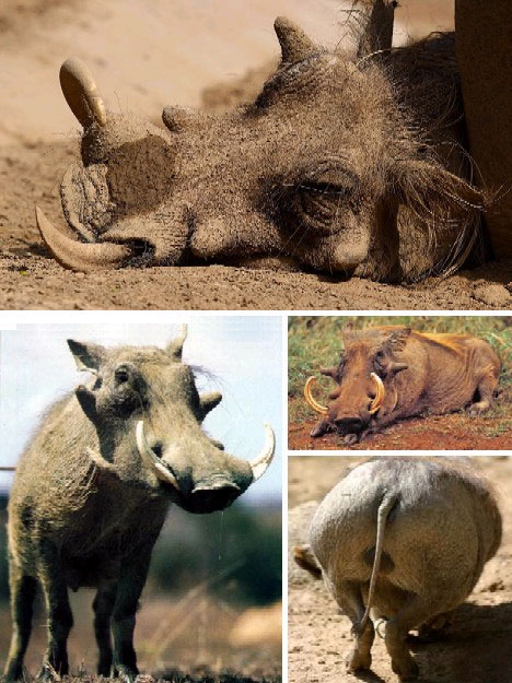 世界上最丑陋的13种动物 无毛犬艾莉