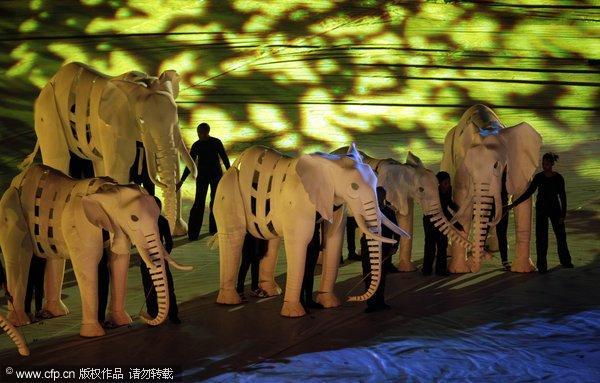非洲大象抢镜