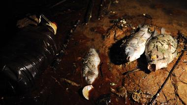 7月12日,位于汀江河下游的棉花滩库区边散落着因水质污染致死的河鱼