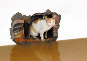 图:昨日,一只小猫受困于临江某仓库通风口处。本报记者 何熠 摄