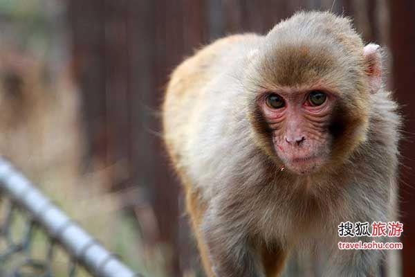 八达岭野生动物园旅游自驾全攻略-搜狐旅游