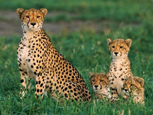 """组图:动物世界精灵可爱的""""baby""""图片"""