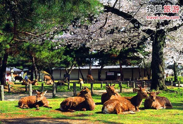 日本奈良旅游攻略