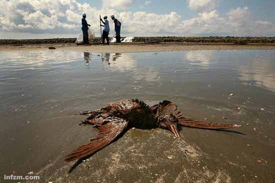 生态保护     美国环境法权威最新撰文披露:被刻意隐藏的bp漏油事故