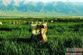 西部纳凉 新疆十大避暑圣地盘点