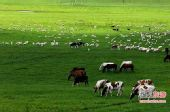 国家地理摄影师推荐 乌兰布统大草原