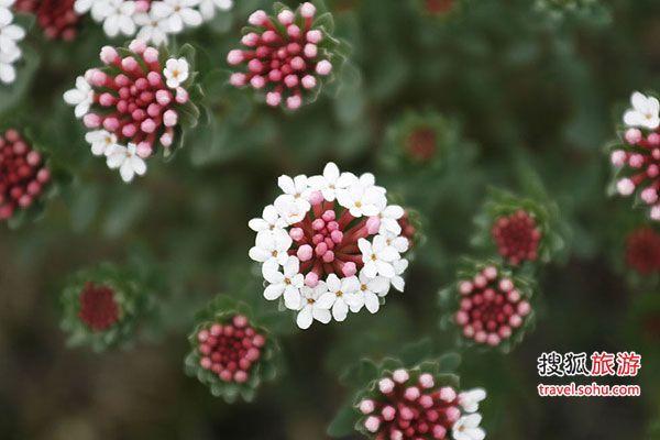美丽的小花