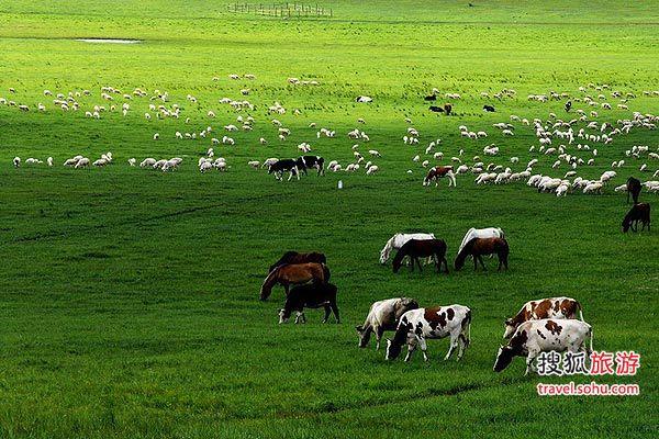 草原避暑四大超酷玩法 寻找你的独到之处