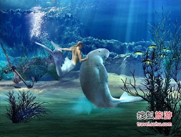 世界上最漂亮的美人鱼图片_世界海洋馆萌死人的动物 谁是保罗的接班人 -搜狐旅游
