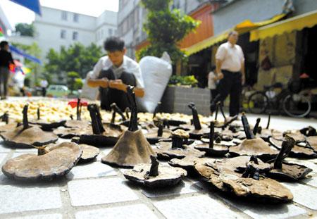 """广州清平药材市场里,灵芝并未被当作""""神药""""来卖 李小萌 摄"""
