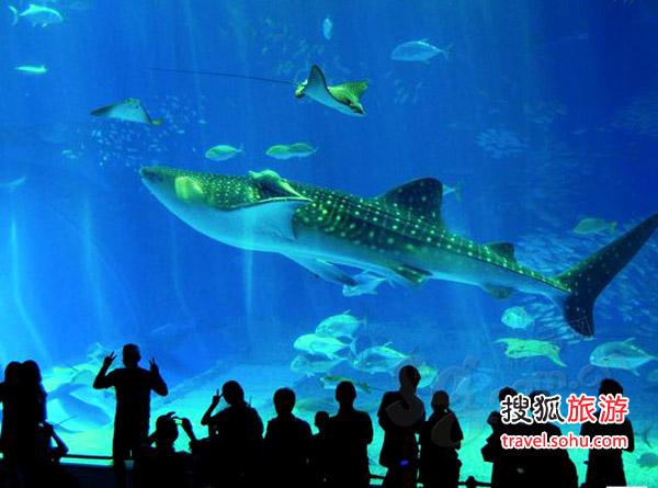 日本 海洋童话   当月事件   参加一年一度海洋博公园举办的美丽海体验节,让孩子零距离接触大海   想带着孩子最近距离认识海底世界?日本冲绳的美丽海水族馆是今夏不错的选择,这里是冲绳海洋的缩影。从三楼进入,循着参观路线,珊瑚礁之旅黑潮之旅及深海之旅三大主题馆一一呈现,有如从浅滩走入深海,孩子可以在礁岩池中自由触摸不同形态的海星、海参、海胆、热带鱼等生物,以不同的深度及角度细探周遭海洋的奥秘。最大的惊喜出现在最底层。当8米高,20米宽,目前全世界最大的有机玻璃墙鱼槽出现在眼前时,海中生物朝自