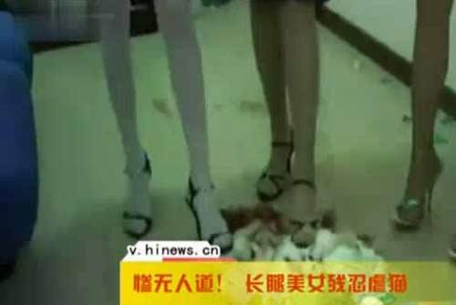 数名长腿美女自拍虐猫兔照