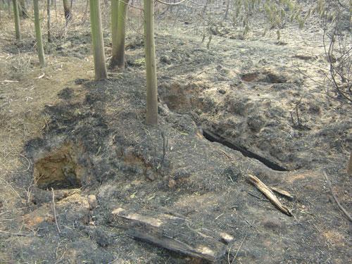 被挖开的飞虎队员墓地和暴露的棺椁。云南省飞虎研究会供图