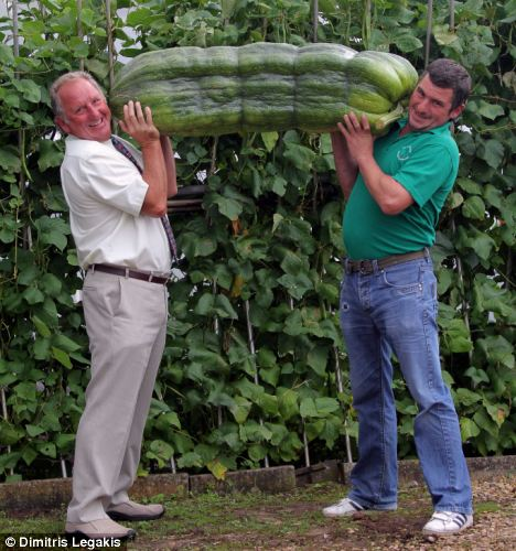 That's got to be one of your five-a-day: Phillip Vowles (left) and son Andrew hoist up the vast vegetable