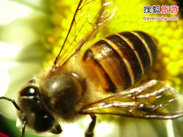 中国蜜蜂博物馆里的蜜蜂奥特曼大蜗牛图片