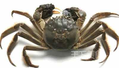 各种蟹的图片大全图解