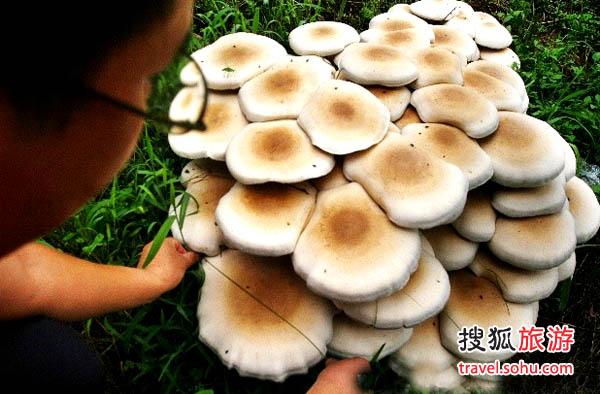 百菇观光采摘园