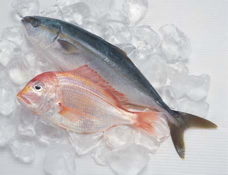 鱼在冰箱内并不保鲜