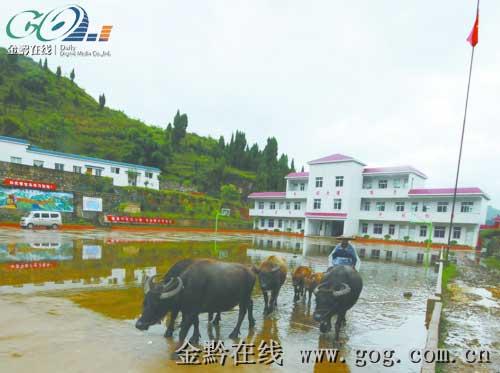 落北河中学可以随意出入。10月2日,一农民赶着牛经过学校操场。