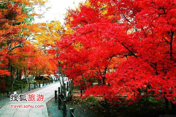 加拿大素有枫叶之国的美誉,每到深秋,枫叶将山林浸染,景色绝美.图片