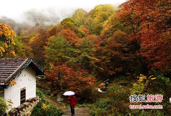 """十月,去四川光雾山观赏出身名门的""""金叶"""""""