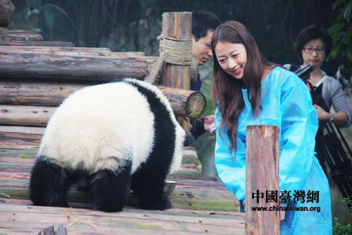 """来自台湾的""""熊猫守护使""""王郁文与熊猫亲密接触。(中国台湾网  马迪  摄)"""