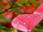 宝金山的红叶