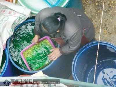 作坊的人员正在从桶里打捞浸泡好的青豆。