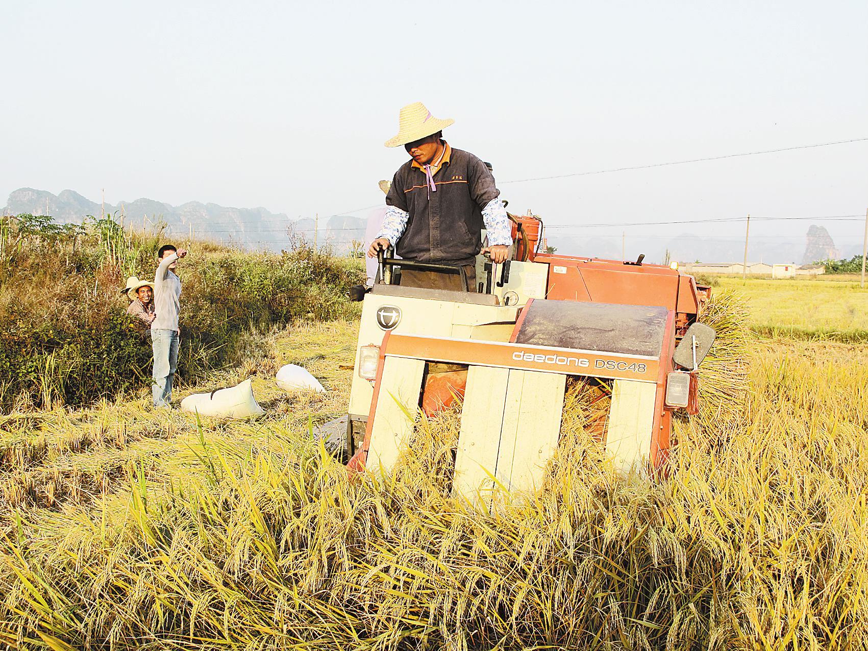 高峰/11月3日,上林县白圩镇不孤村前,大型水稻联合收割机正收割...