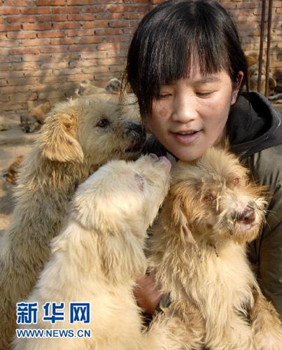 流浪狗乐园:8年收养流浪小动物1500余只(组图)