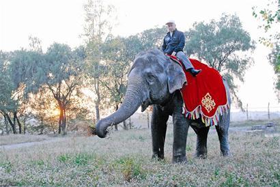 """武汉动物园大象""""清洁工""""打扫狮虎园(组图)"""