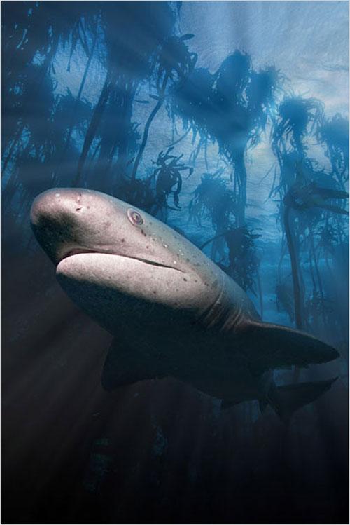各种神奇 2010年最佳水下摄影作品精选