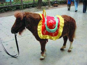 """矮小""""宠物马""""在网上吸引了一批追求新奇的顾客。(网络截图)"""