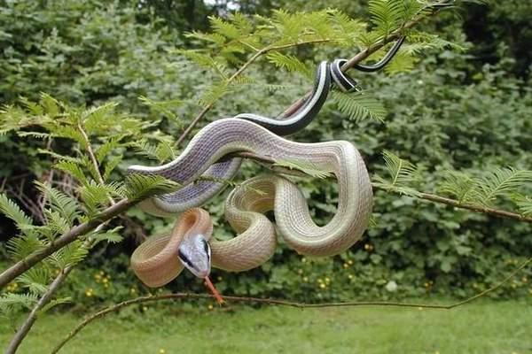 自然界的美丽蛇王 绝对惊艳!(组图)