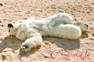 环保人士扮成北极熊,在坎昆会议场外抗议。
