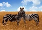 土耳其摄影师ATK野生动物生态摄影作品欣赏