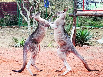 """在南京红山动物园内,可爱的小动物们都是""""笑星"""""""
