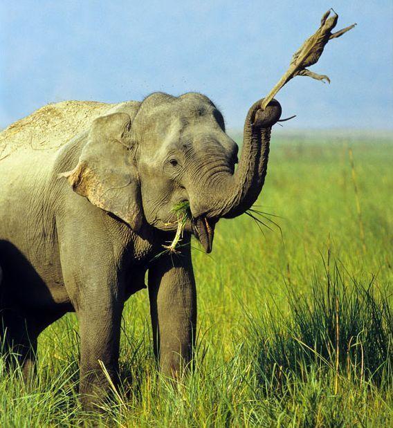 大象桥歌曲简谱