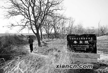 秦东陵_秦东陵一号大墓被盗案告破 7名犯罪嫌疑人落网(组图)