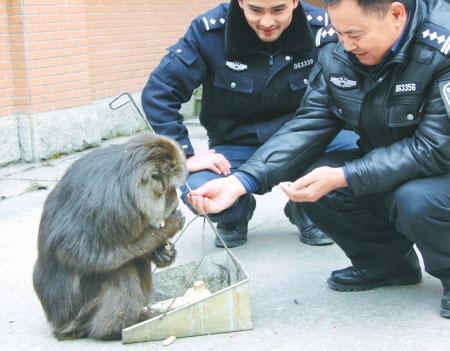 民警给下山找吃的猴子喂花生