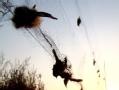 致命天网:鄱阳湖反盗猎野生禽类保护纪实