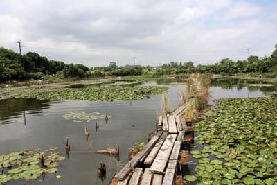 莲花池上的浮桥,踏上去可一尝「水上飘」的滋味