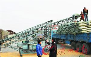 山海关车站职工正在抢卸集中到达的80车玉米和小麦。(资料图片) 新华社发