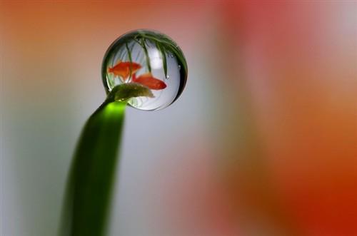 超现实主义艺术:绽放在露珠里的鲜花